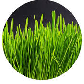 Grass close-up
